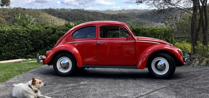 1962 Beetle with 2011 Rescue Dog Ziggy- Peter Webb copy